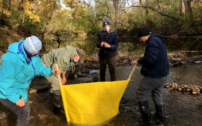 Fall 2020 Water Quality Snapshot finds sensitive critters