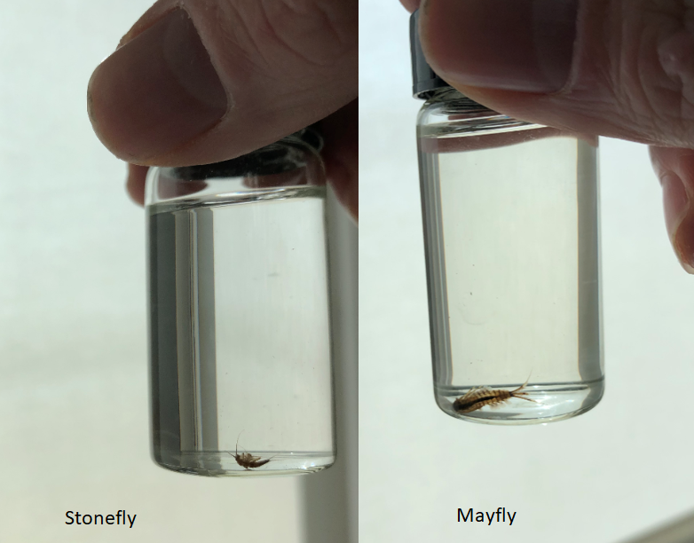 Vials containing tiny mayflies and stoneflies