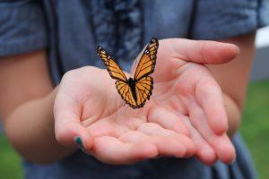 Monarch Buttery Release