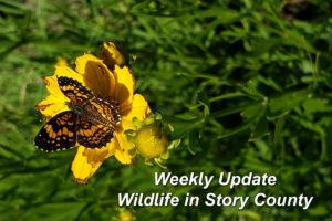 Story County Weekly Wildlife Update