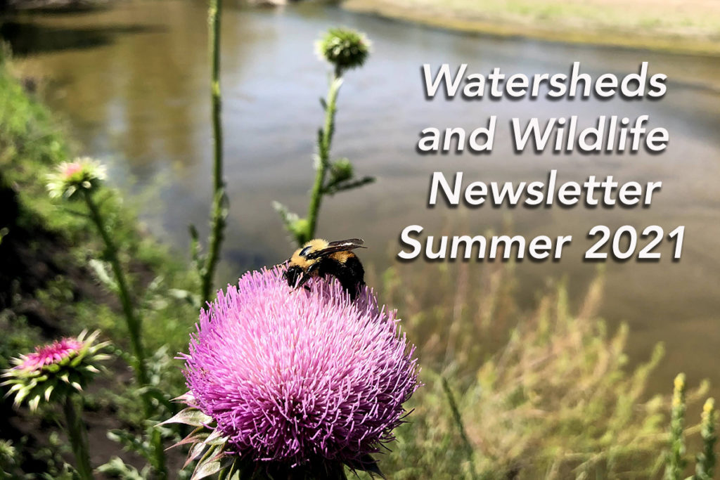 Watersheds & Wildlife Summer 2021 Newsletter